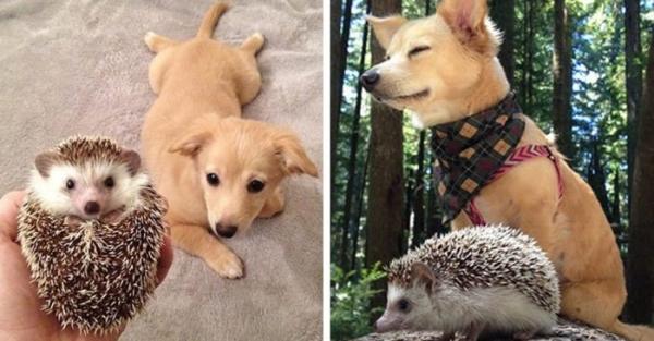 Животные, которые выросли вместе