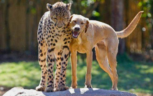 Животные с неудачной анатомией и странными повадками