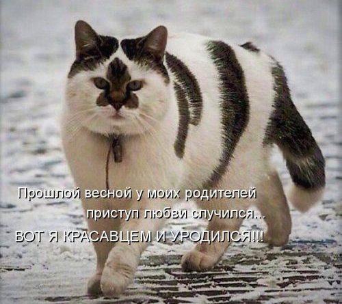 Самые свежие и самые прикольные котоматрицы