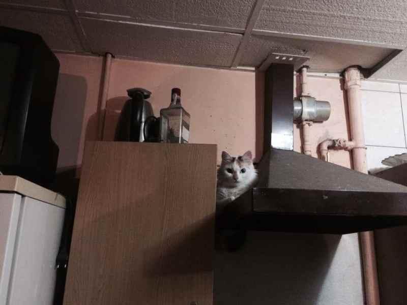 20 мест, в которых не должно было быть кота, но вот он (20 фото)