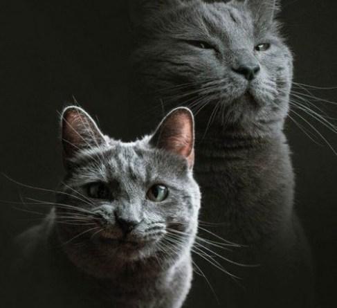 Кот и фотограф