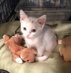 This feral kitten was saved by Marvin.