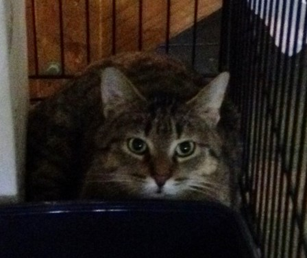 Once left for dead in a plastic bag in a ditch, Mister (kitty) is healthy and needing a home.