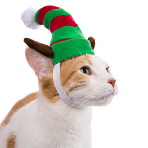 stocking hat for cat petsmart