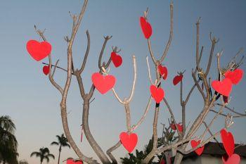 800px-Valentinesdaytree