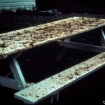 Frass_picnic_table[1]