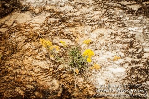 yellowstone-3_127