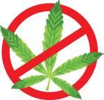 no marijuana drugs