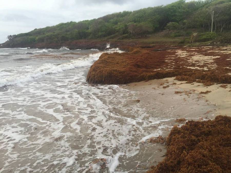 Seaweed all over