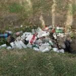 Litter in Abundance