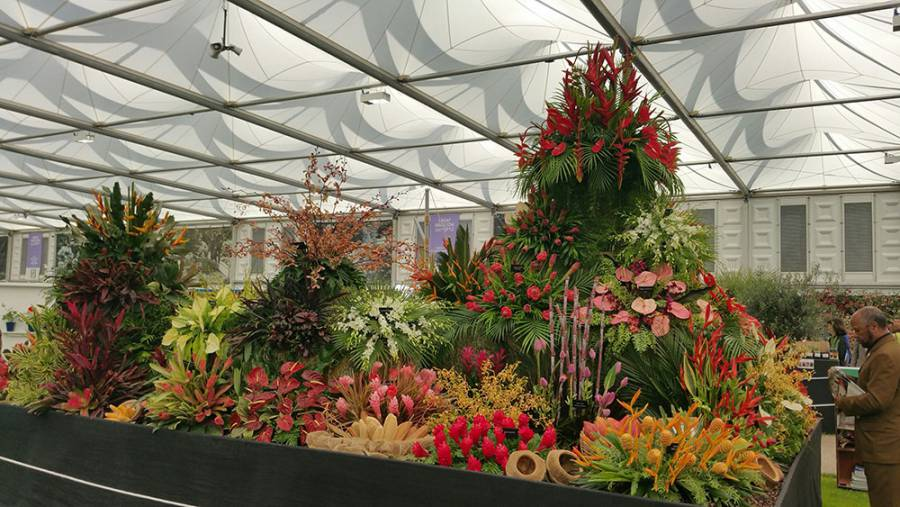 Grenada exhibit at RHS Chelsea Flower Show May 2016