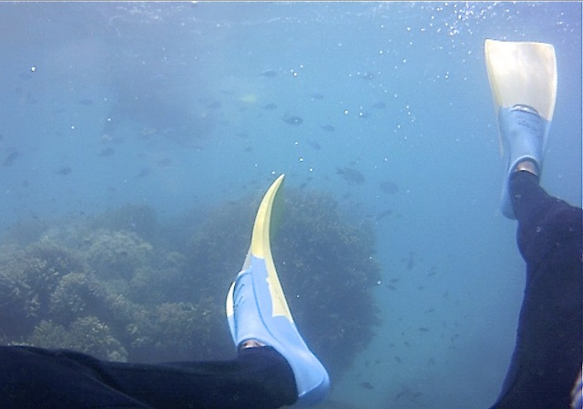 snorkeling indonesie
