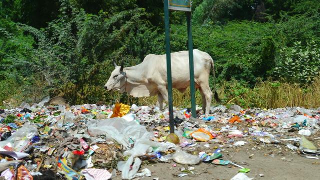 Inde 24 septembre - Ranakpur 022