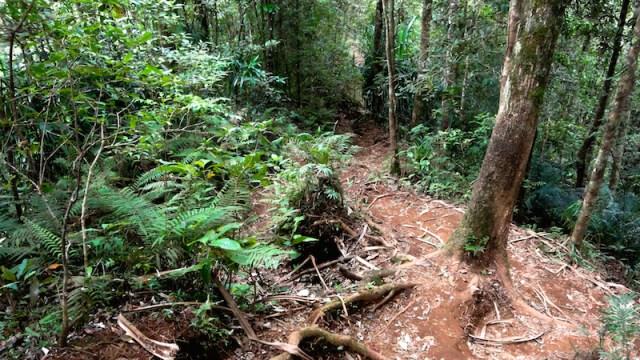 """Le """"terrain"""" du trek du Rinjiani, racines et terre"""