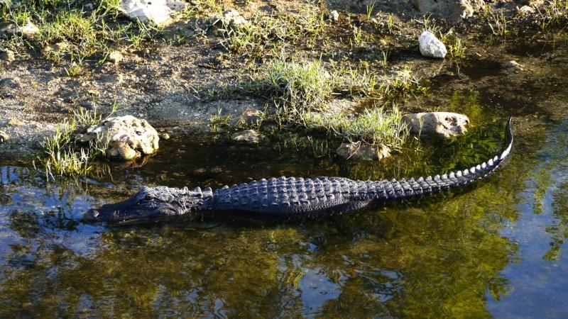Everglades Floride-4