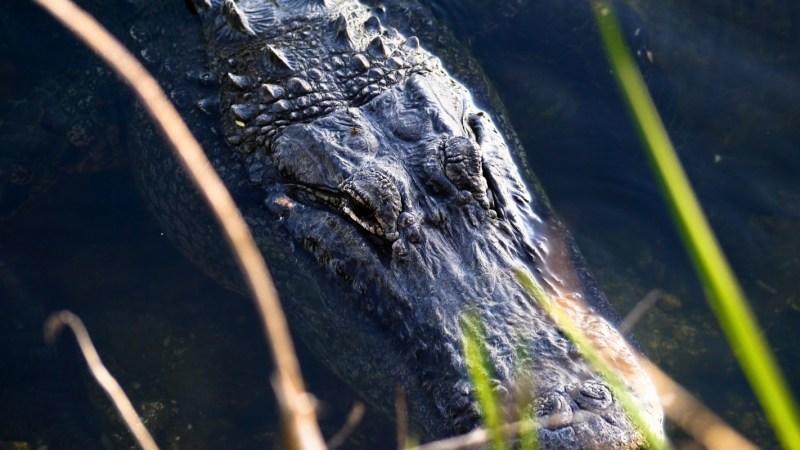 Everglades Floride-5