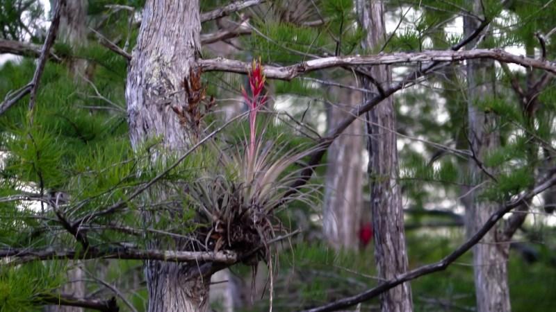 Everglades Floride-9