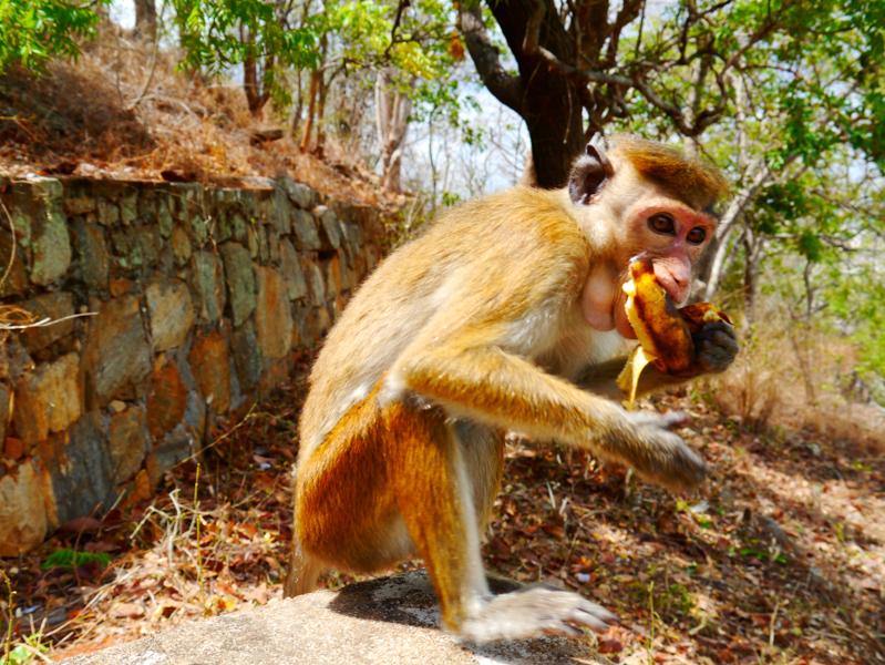 Voyage au Sri Lanka (25 sur 13)