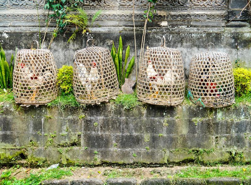 Indonesie Balade Ubud