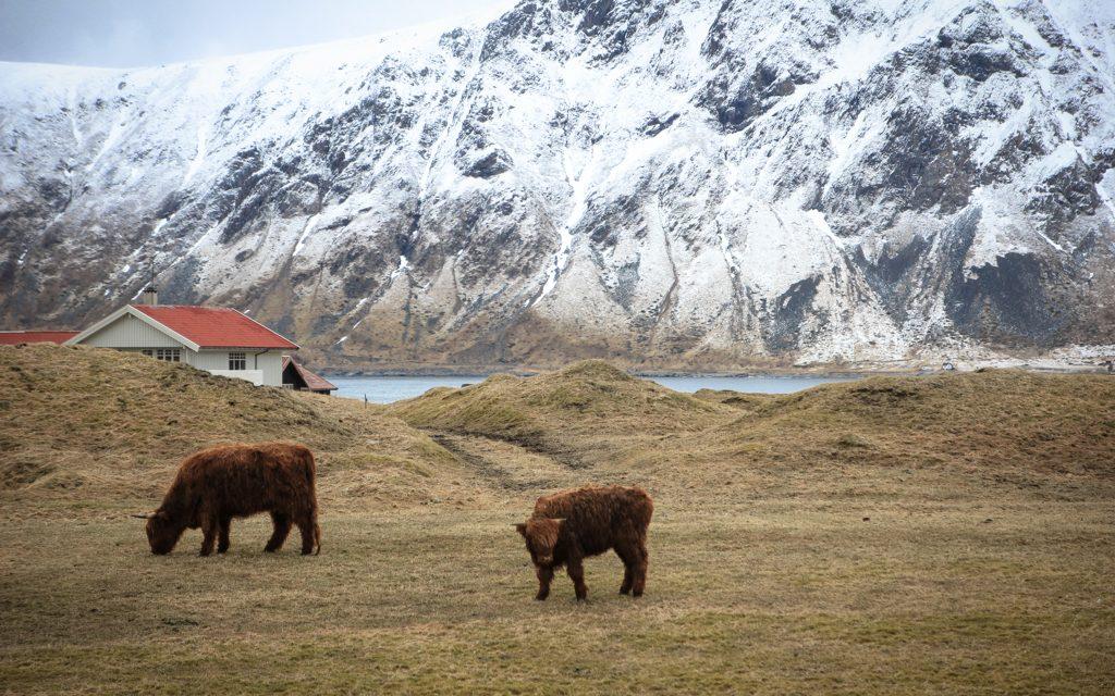 Faire des rencontres inédites lors d'un voyage en Norvège avec un bébé