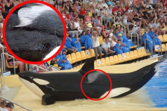 #Retro La triste historia que no sabías de la ballena Keiko
