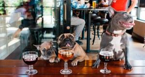 """#Curiosidades : 5 lugares """"Pet Friendly"""" ¡Los amarás!…"""