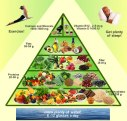 vegan_food_pyramid
