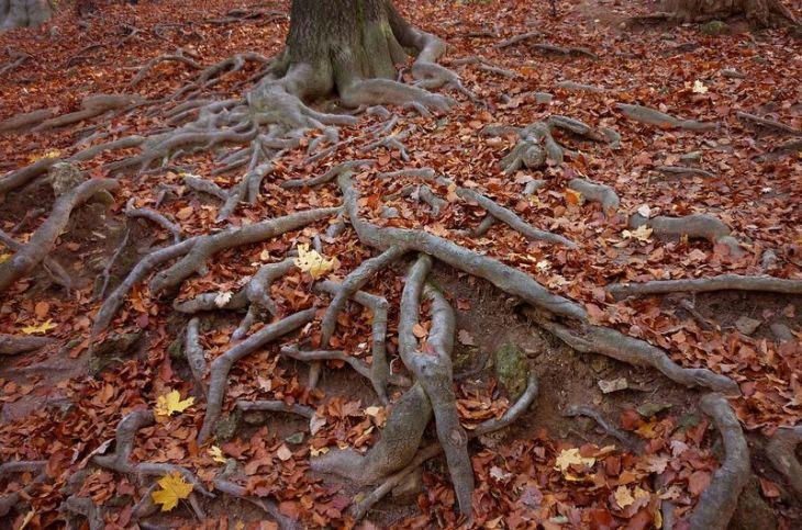 jesień (3)