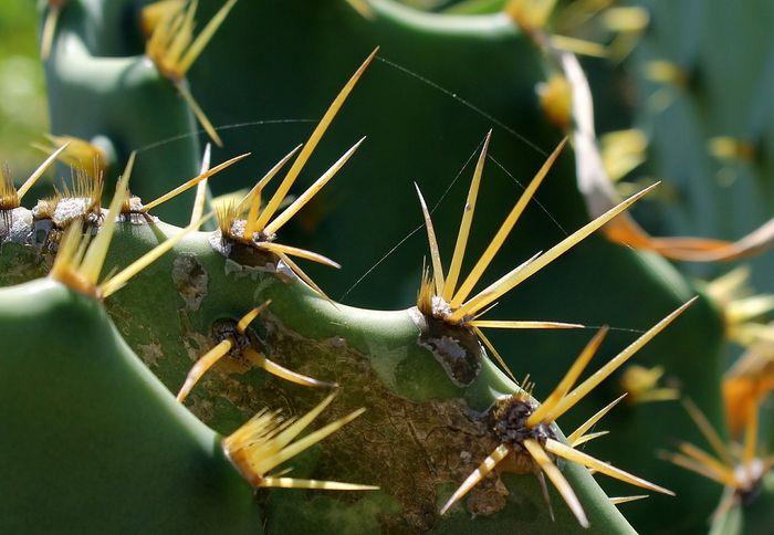 kaktus (1)