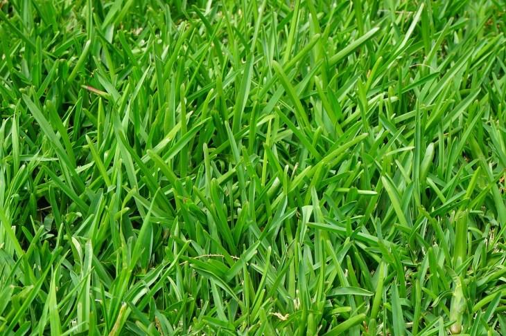 trawa w rolkach