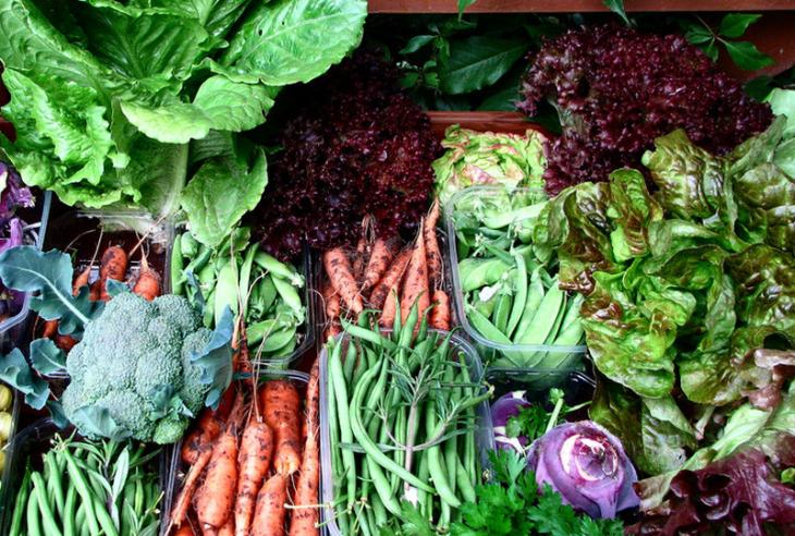 ogrod warzywny