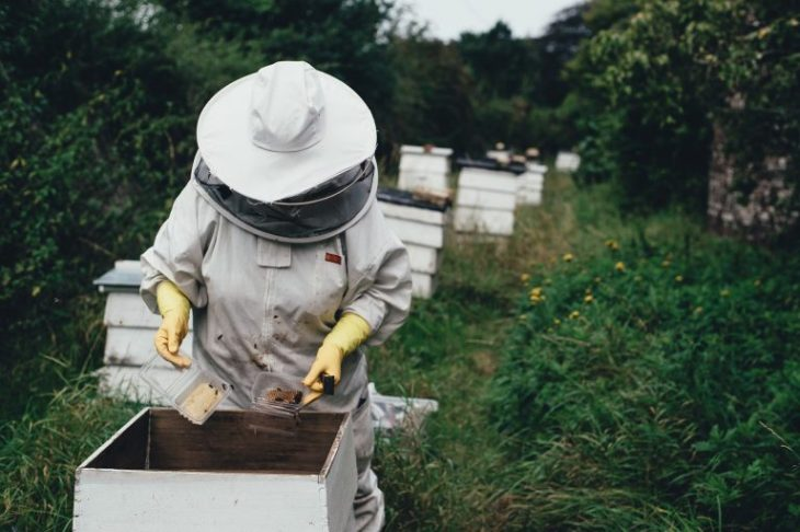 pszczelarstwo, pszczelarz, hodowla pszczół