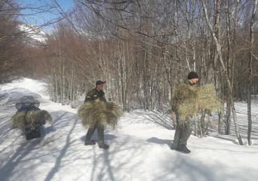 Služba zaštite NP Lovćen vrši prihranu sisara biljojeda