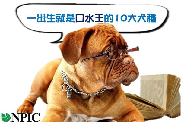 10大容易流口水的犬種