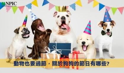 狗狗節就要送NPIC天然潔牙骨給寶貝的牠,潔牙的同時有能吃的健康開心,人食用等級絕不加防腐及鹽糖,主人更安心