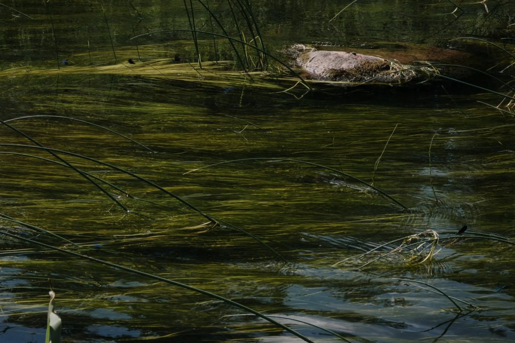 brown and green moss on body of water