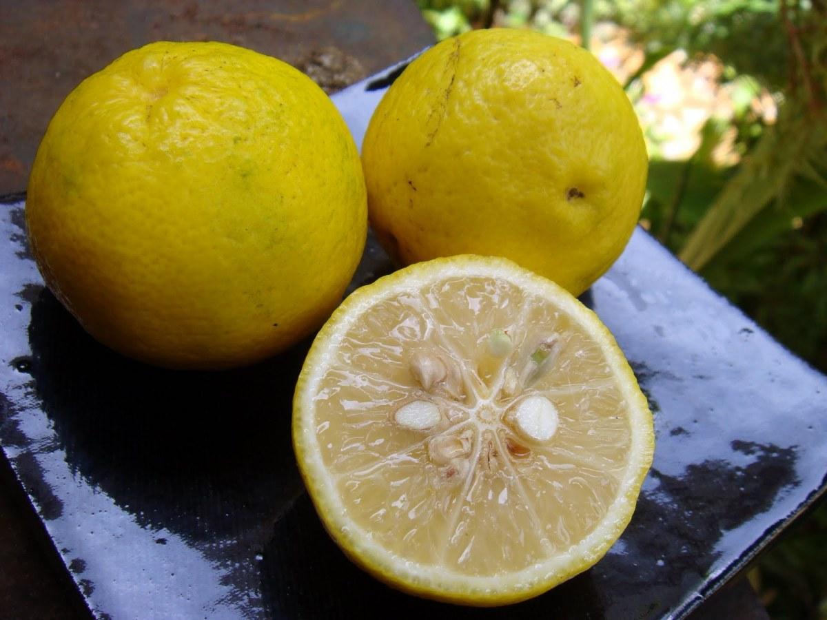Resultado de imagem para Noz moscada limão fotos