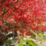 宮島に紅葉を見にいってきた…ので…