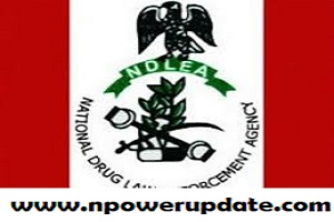 NDLEA Releases List of Successful Shortlisted Candidates in Ongoing Recruitment: Check Here