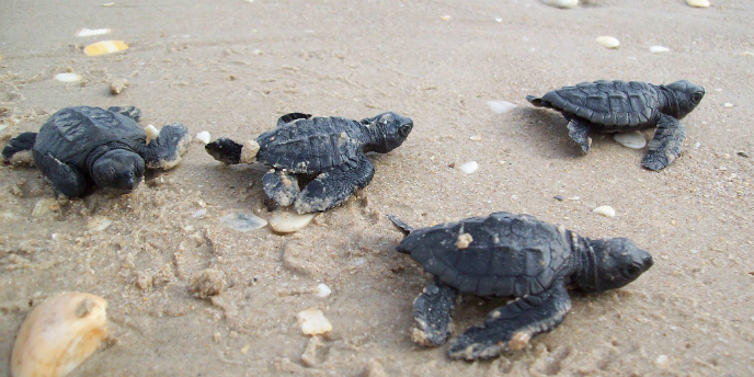 How Can I See A Sea Turtle?
