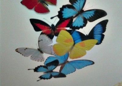 Сатиновый потолок в офисе с фотопечатью «бабочки»