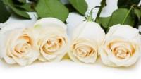 white roses for valentines day