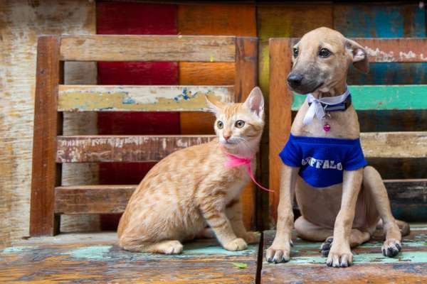 Animal Adoption and Rescue Team, Pune to organize an adoption camp on September 22