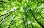 PFC sees strong tailwinds to India's ambitious green energy target