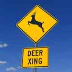 Community Alert: Deer Mating Season Has Begun Which Means More Deer in the Roadway