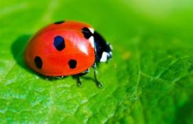 ladybug1-740x477