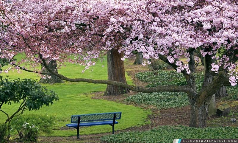 fleurs de cerisier elegant wallpapers