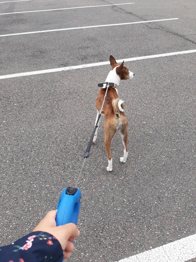 Laisse enrouleur chien