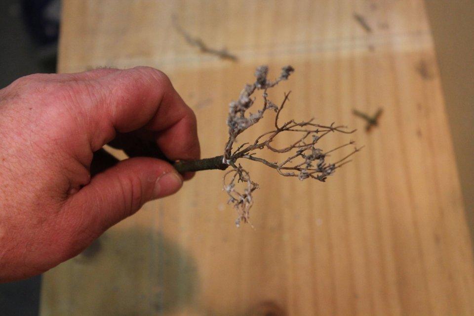 Faire un arbre avec du thym