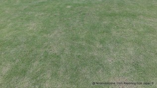 Nintendo HQ Lawn